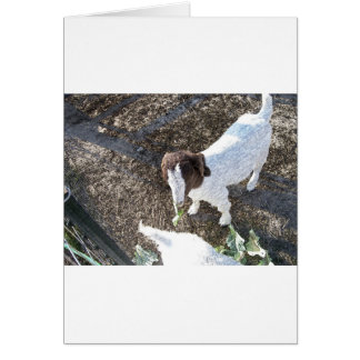 Carte Chèvre de bébé avec le feuille de chou