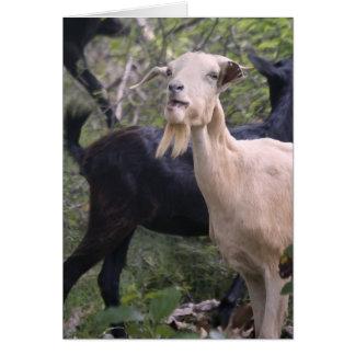 Carte Chèvre de Billy des Caraïbes