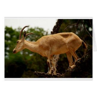 Carte Chèvre de montagne