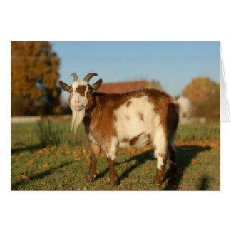 Carte Chèvre rouge et blanche