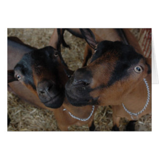 Carte chèvres