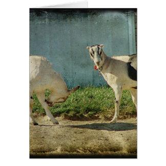 Carte Chèvres de laiterie