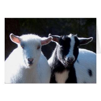 Carte Chèvres naines nigériennes