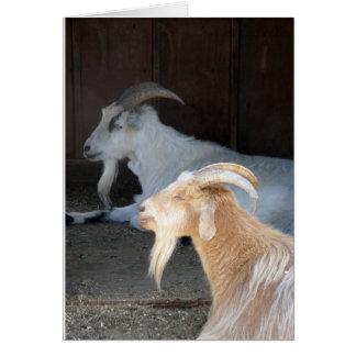 Carte Chèvres tranquilles