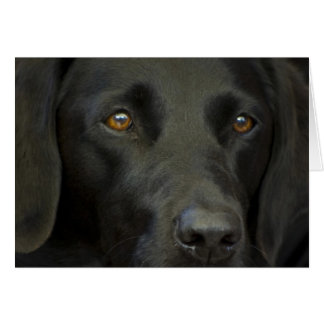 Carte Chien noir de Labrador