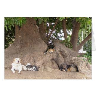 Carte Chiens dans un arbre