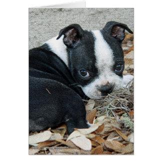Carte Chiot de Boston Terrier