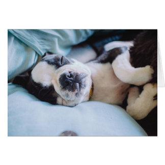 Carte Chiot de Boston Terrier faisant une sieste dans le