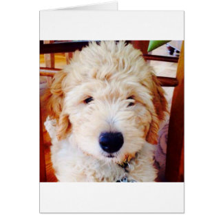 Carte Chiot de Goldendoodle