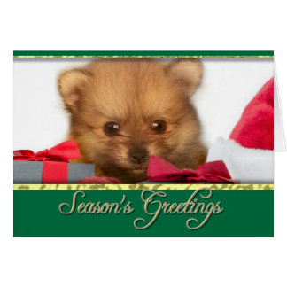 Carte Chiot de Pomeranian de Noël