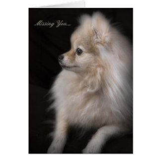 Carte Chiot de pose adorable mignon de Pomeranian
