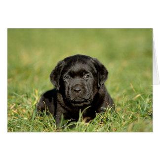 Carte Chiot noir de labrador retriever