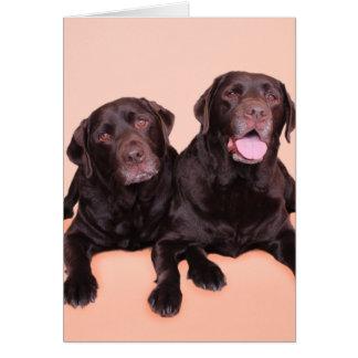 Carte Chocolat Labradors