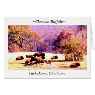 Carte ~Choctaw Buffalo~