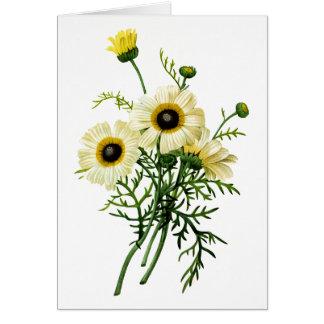 Carte Chrysanthème blanc par Pierre Joseph Redoute