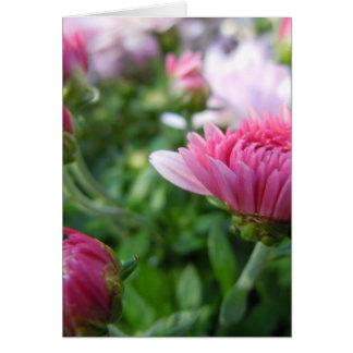 Carte Chrysanthème de floraison