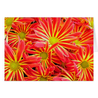 Carte Chrysanthèmes