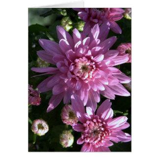 Carte Chrysanthèmes roses