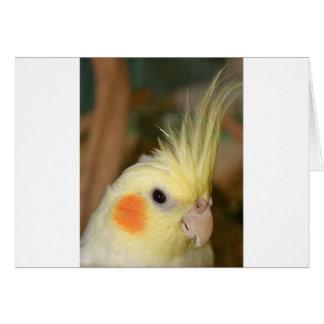 Carte Cockatiel Cutie