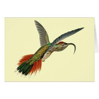 Carte colibri Cuir-coupé la queue de Sicklebill - Ernst