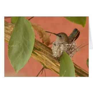Carte Colibri sur le nid