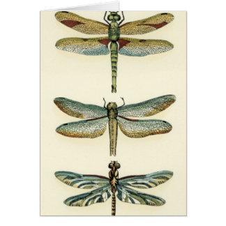 Carte Collection de libellule par Chariklia Zarris