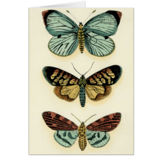 Carte Collection de papillon par Chariklia Zarris