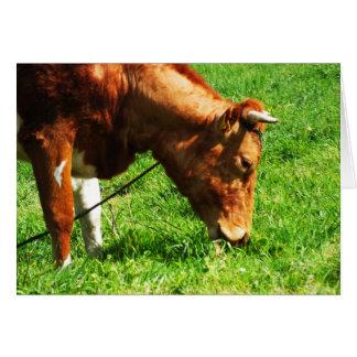 Carte Consommation de vache à Guernesey
