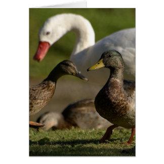 Carte Convention de canard