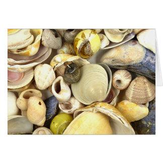 Carte Coquilles de mer