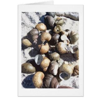 Carte Coquilles d'escargot