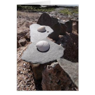 Carte Coquilles et pierres