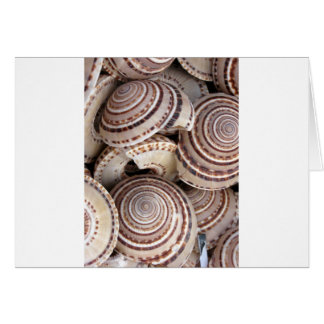 Carte Coquilles rondes de mer