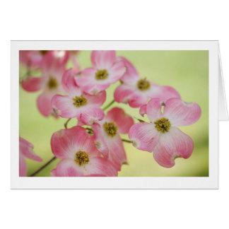 Carte Cornouillers roses