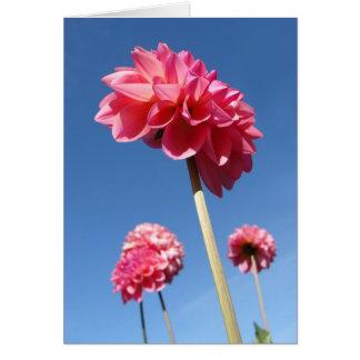 Carte Dahlia, angle faible de fleurs grandes de rose