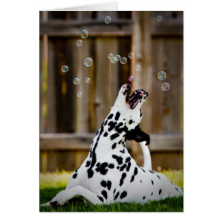 Carte Dalmate avec des bulles