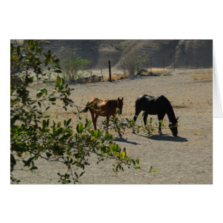 Carte d'amitié : Chevaux dans San Miguel, la
