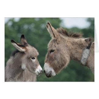 Carte d'âne et de poulain