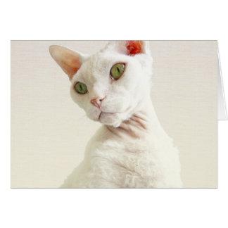 Carte d'anniversaire de chat de la carte | Devon