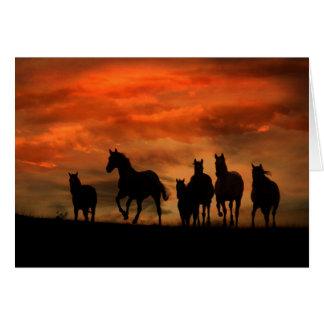 Carte d'anniversaire de cheval sauvage d'un groupe
