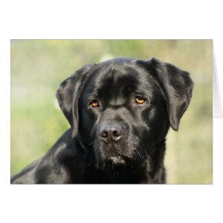 Carte d'anniversaire noire de Labrador
