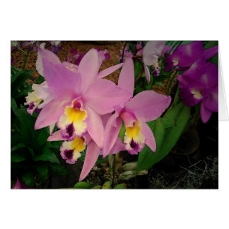 Carte d'anniversaire : Orchidées avec un rêve