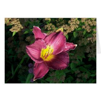 Carte Daylilly rose