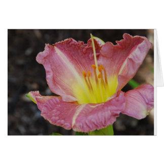 Carte Daylily rose