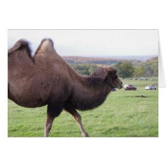 Carte de chameau