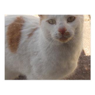 Carte de chat de voisinage