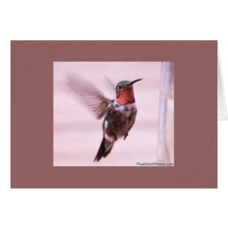 Carte de colibri