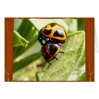 Carte de ~ de scarabées de Milkweed