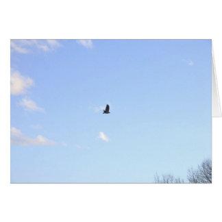 Carte de faucon coupée la queue par rouge en vol