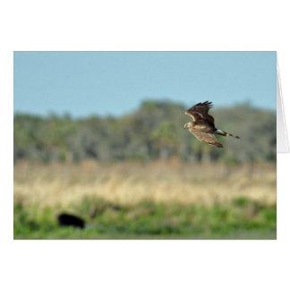Carte de faucon en vol